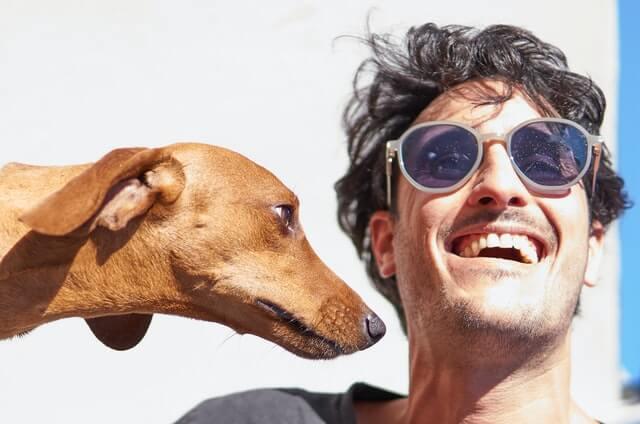 サングラスをかけた笑顔の男性と見つめている犬