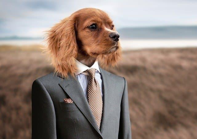 スーツを着た犬